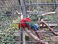 Zoo praha mg 004.jpg