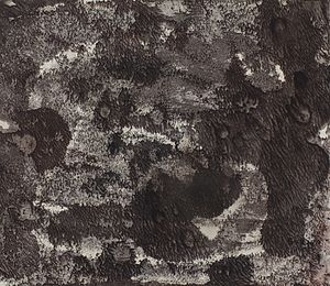 "Amanda Snyder - Image: ""Cave dwellers"" by Amanda Snyder"