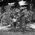 """""""Ječmen žanje"""", pri Betegarjevih. Tatre 1955.jpg"""