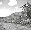 """""""Planta"""" pod Žvanuti - Lozice. Zadaj so vinogradi 1958.jpg"""