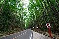 """""""road side"""".jpg"""