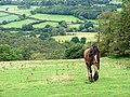 'Heavy Horse' and the Rheidol Valley - geograph.org.uk - 927114.jpg