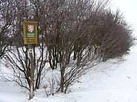 Červený rybníček, zima 2013, (3).JPG