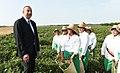 """İlham Əliyev Lənkəranda """"Astaraçay"""" MMC-nin çay plantasiyalarına baxarkən 09.jpg"""