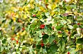 Ботанический сад, Минск - panoramio - sandexx (9).jpg
