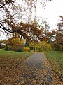 Ботанический сад РАН, осень 2010.jpg