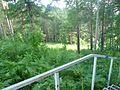 Вид с лесницы, начало июля 2011 - panoramio.jpg