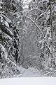 Зеленогорский лес зимой.jpg