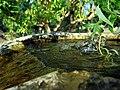 Ивовый листок.jpg