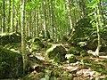 Каміння біля стежки до водоспаду Лихий.jpg