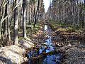 Канава весной - panoramio.jpg