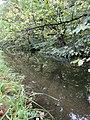 Канал Гольца (Верхнесадский) - 3.jpg