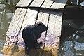 Киевский зоопарк (80).jpg