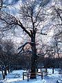Київський зоопарк взимку5.jpg