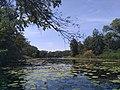 Краєвид акваторії озера Солоне.jpg
