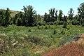 Лесок в ущелье речки Херсонки. - panoramio.jpg