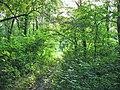 Лісова стежка в заказнику Хорішки.jpg