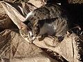 Мачка.jpg