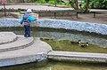 Озеро з качками.jpg