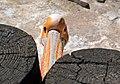 Пелікан в Рівненському зоопарку DSC 0761.jpg