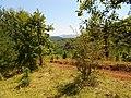 Планина Озрен (17).jpg