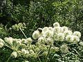 Растения, 26.07.2003 - panoramio.jpg