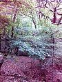 Смоларски водопад 21.jpg