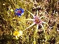 سه گل کوچک.JPG