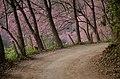 อุทยานแห่งชาติดอยสุเทพ-ปุย 1.jpg
