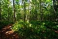 イコロの森(ikor-no-mori) - panoramio.jpg