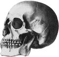 パタゴニアのアメリカ州の先住民族そしてモンゴロイド頭骨.png