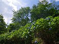 吉野山にて 2013.6.17 - panoramio.jpg