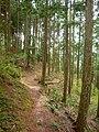 地蔵峠から粟飯谷へ向う途中で 2011.4.26 - panoramio.jpg