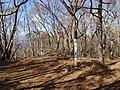 大谷ヶ丸 2010-11-04 - Ootanigamaru - panoramio.jpg