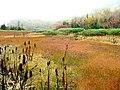 栂池自然園(http-www.tsugaike.gr.jp-) - panoramio.jpg
