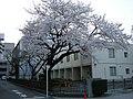 武蔵野簡易裁判所 - panoramio.jpg