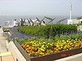海之岛 - panoramio.jpg