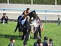 第149回天皇賞 - 149th Tenno Sho Spling (GI) - Kyoto Racecourse (May 4, 2014) (14109497562).jpg