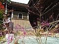 金峯山寺にて ムラサキシキブの実 Japanese beautyberry 2011.11.27 - panoramio.jpg
