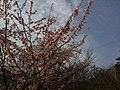 香川県丸亀市丸亀城 - panoramio (57).jpg