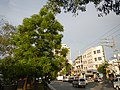 01769jfGil Puyat Avenue Barangays Bridge Taft Pasay Cityfvf 12.jpg