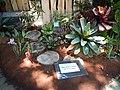 05441jfMidyear Philippine Orchid Show Quezon Memorial Circlefvf 09.JPG