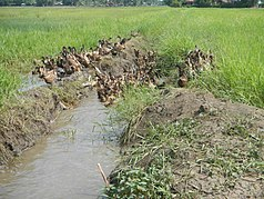 0901Pulilan Bulacan Landmarks Road Constructions 23.jpg