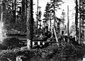 095547 Road & Loading Donkey Engines, Oregon NF, OR 1911 (22012876156).jpg