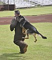 2010 Hawaiian Islands Working Dog Competition DVIDS342913.jpg