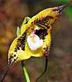 2010 Pacific Orchid Expo 07 - cropped.jpg