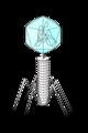 201202 phage.png