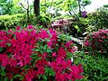 2012 kveten botanicka zahrada 062.JPG