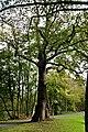 2014-10-12 Sommerlinde, Burg Vischering,Lüdinghausen,NRW 01.jpg