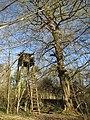 20140320Carpinus betulus09.jpg
